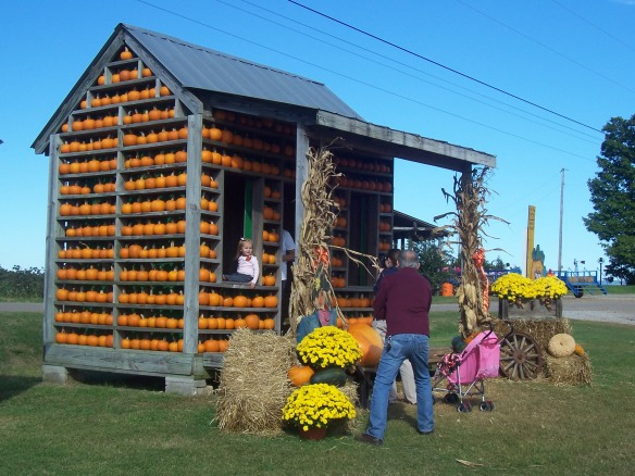 Tate Farms pumpkin patch
