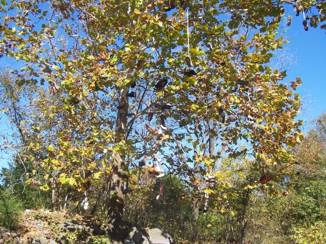 Shoe Tree on U.S. 72 West