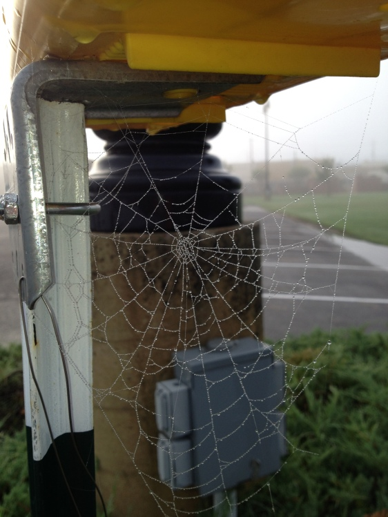 Most bloggers/photographers/writers find stunning spider webs in beautifully inspiring settings -- sunrise over a mountain, a softly lit field of daisies, etc.  I, on the other hand, get spider webs under plastic newspaper boxes, in front of a utility pole and with a parking in the background. Sigh. But still: Nature, you are way cool. Even if you don't give me the National Geographic shots I deserve.